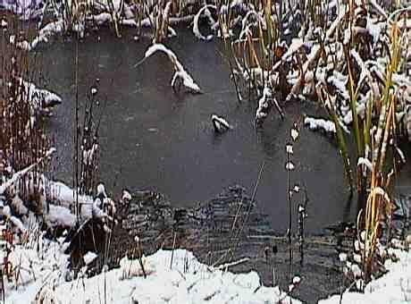 können schnaken stechen der teich im winter
