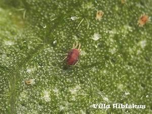 Was Tun Gegen Kleine Fliegen Im Blumentopf : rote ameisen vernichten rote ameisen im garten vernichten ~ Lizthompson.info Haus und Dekorationen