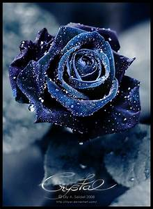 Crystal by Lilyas - beautiful dark blue rose decorated ...