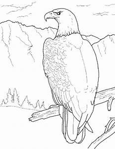 free printable bald eagle coloring pages for kids With bald eagle diagram