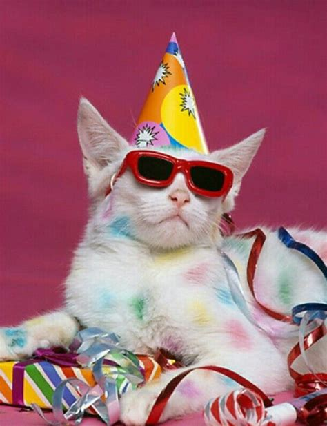 Cat Happy Birthday Party