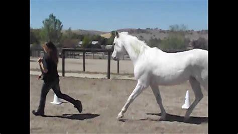 horse loyal arabian