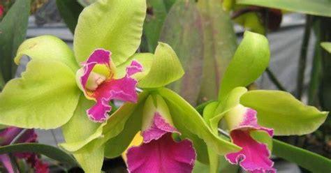 jual tanaman hias anggrek jual tanaman hias