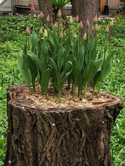 tree stump planters turn an tree stump into a beautiful planter your