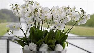 Künstliche Pflanzen Wie Echt : orchideen die edel anmutende und dekorative pflanzenfamilie ~ Michelbontemps.com Haus und Dekorationen