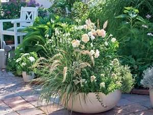 Die Schönsten Balkonpflanzen : die sch nsten ziergr ser f r t pfe pinterest t pfchen kr uter und g rten ~ Markanthonyermac.com Haus und Dekorationen