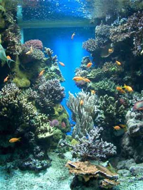 monaco aquarium pictures
