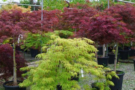 piante ricanti da giardino piante da giardino e esterno garden roagna vivai cuneo
