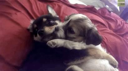 Puppies Hug Cuddle Animated Hugs Hugging Gifs