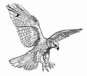 Graphite/Pen Drawings by edwinnnng on Pinterest | Bird ...