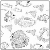 Aquarium Fish Drawing Coloring Getdrawings Printable Ocean Sea sketch template