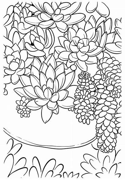 Coloring Succulent Pages Succulents Printable Adult Cards