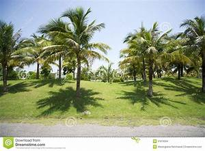 Coconut Garden. Stock Images - Image: 31819294