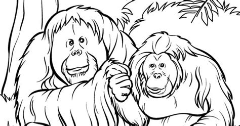 top   printable zoo coloring pages  zoos coloring books  adult coloring