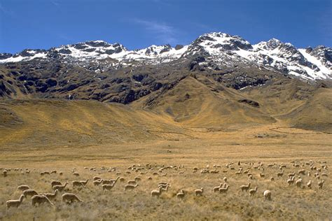 Altiplano Pictures, Peru, Andes mountains high plains