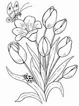 Coloring Pages Tulip Flower Flowers Printable Tulips Print sketch template