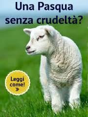 Trieste Campagne
