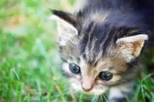 World's Cutest Kitten