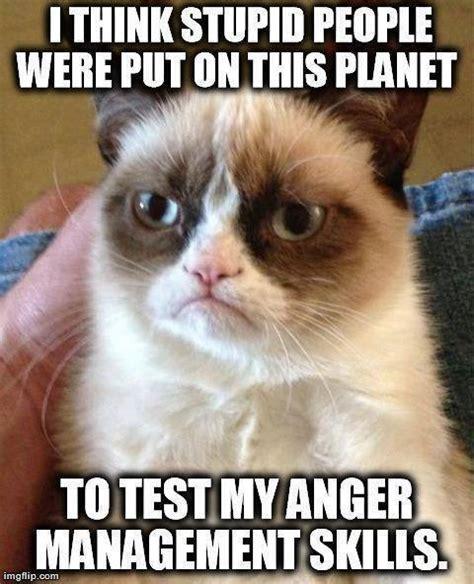 New Grumpy Cat Memes - 8 new grumpy cat memes
