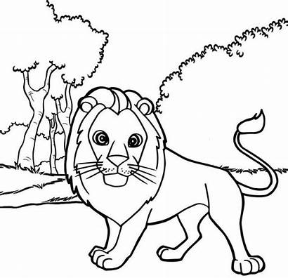Lion Coloring Cartoon Male Sheet Pages Easy
