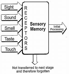 sensory memory Archives - Memorise