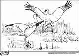 Stork Coloring Pages Storks Colors Popular sketch template