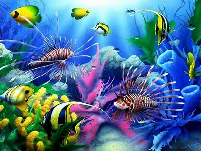 Fish Colorful Tropical Desktop Coral Sea Seabed