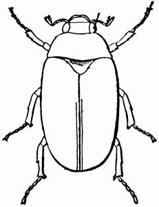 Black And White Drawings Of Bugs - ClipArt Best