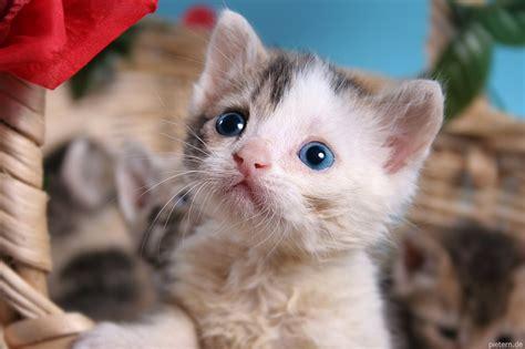 eyes kittens cat born hoschie deviantart kitty