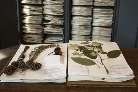 collections   hyde herbarium university