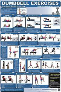 Exercise Chart Dumbbell Lower Body Chest Back