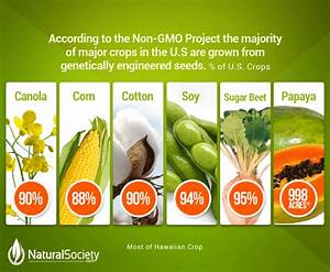 Americans To Eat 1  Billion Pounds Of Gmo Foods On