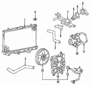 Kia Spectra Radiator Coolant Hose  Lower   Auto Trans