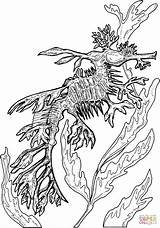 Coloring Seahorse Dragon Sea Pages Leafy Adult Colouring Seadragon Animal Printable Drawing Clip Horse Fish Ocean Popular Template Supercoloring Coloringhome sketch template