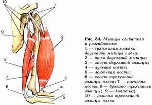 Мази для лечения бурсита в плечевом суставе