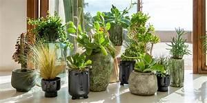 Marc De Café Plantes D Intérieur : les plantes d polluantes contre les ondes marie claire ~ Melissatoandfro.com Idées de Décoration
