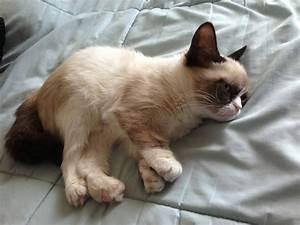 Meet Tard, the grumpy cat (10 pics + video) | Amazing ...