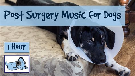 surgery   dogs soothing   dogs post