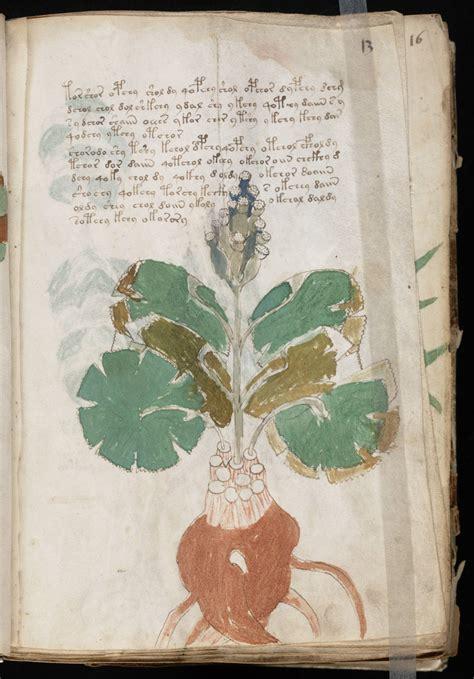 voynich gallery  complete manuscript