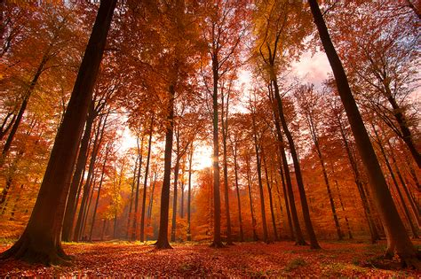 Autumn Splendor By Nichofsky On Deviantart