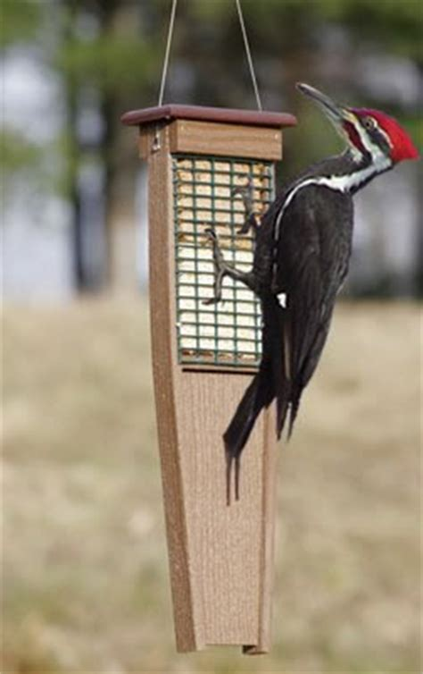 pileated woodpecker feeder trying to choose a suet feeder birds and blooms