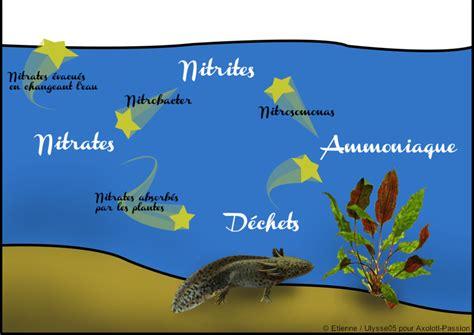 rodage de l aquarium