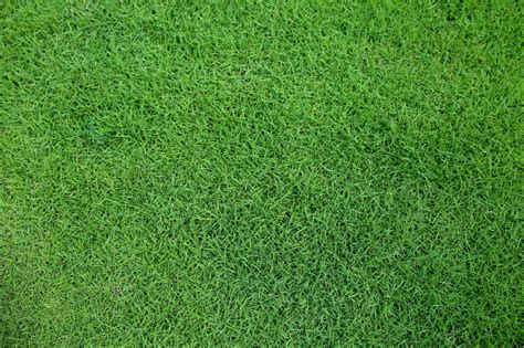 Learn How To Care For Your Zoysia Grass