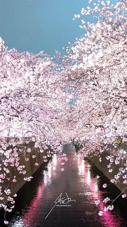 Cherry Blossom Tokyo Wallpapers Japan Medium Nakameguro