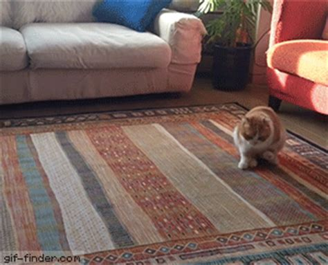 Dog Dragging On Carpet Gif   Carpet Vidalondon