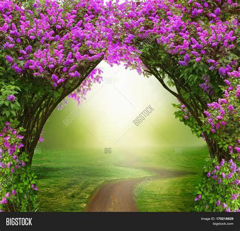 fantasy background magic forest  roadbeautiful