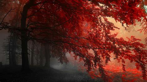 Red Forest Wallpaper  Wallpaper Studio 10  Tens Of