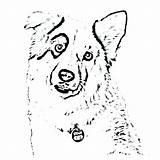 Shepherd Coloring Australian Dog Cattle Colorings Printable Getcolorings Getdrawings sketch template