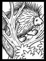 Porcupine Coloring Pages Tree Animals Printable Porcupines Animal Colouring Cute Clipart Supercoloring Atozkidsstuff Coloringpagebook Wildlife Advertisement Categories sketch template