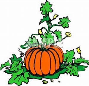 Pumpkin Flower Clip Art | Clipart Panda - Free Clipart Images